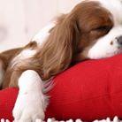 Educando mi perro: Servicios: Reducción de estrés y ansiedad
