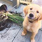 Educando mi perro: Servicios: Consultoría en problemas de conducta