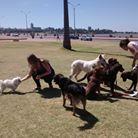 Educando mi perro: Servicios: Socialización grupal