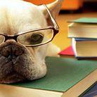 Educando mi perro: Servicios: Formacion práctica