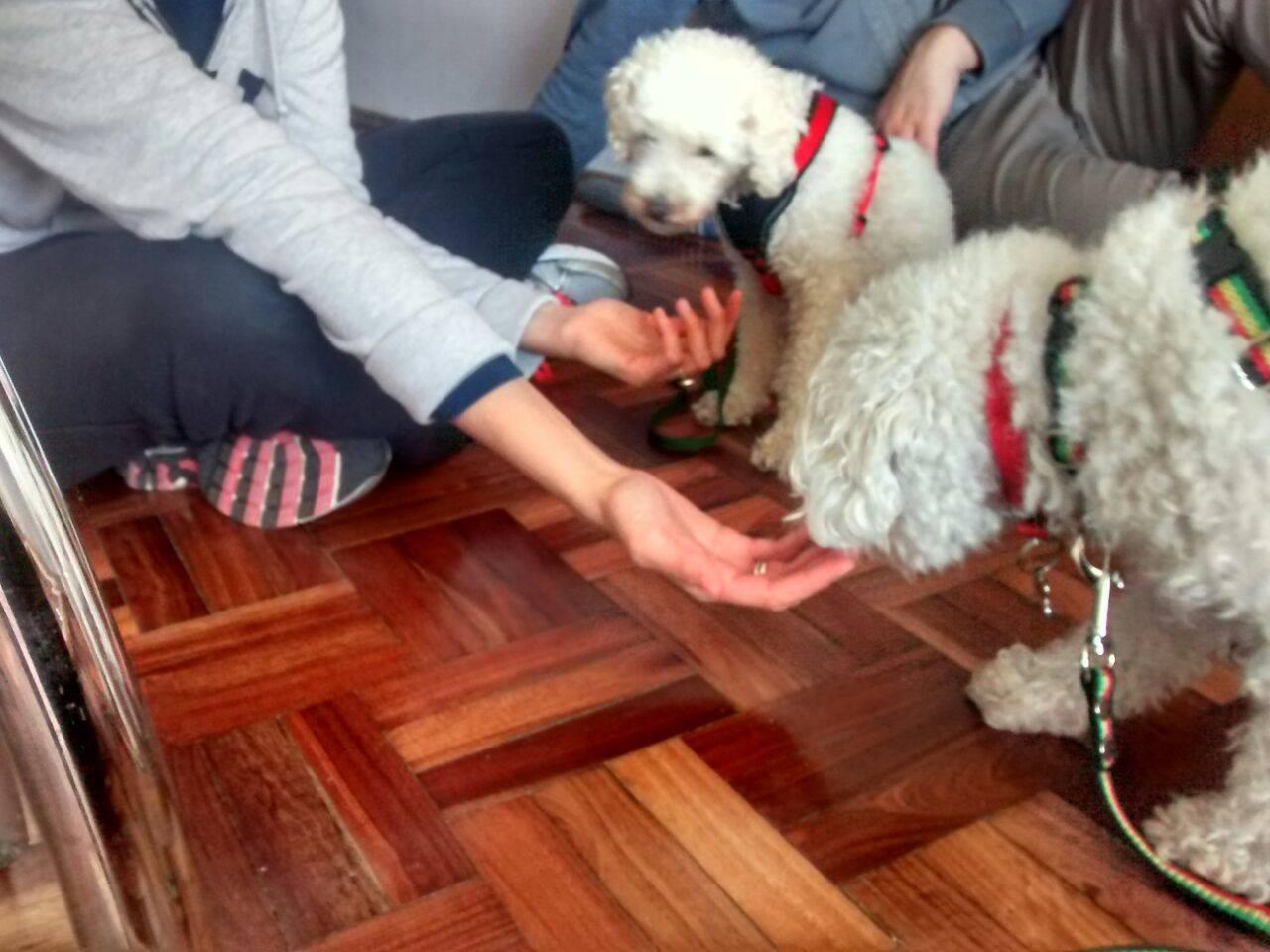 Educación caninca - Casos: dos perros caniches con problemas de inseguridad