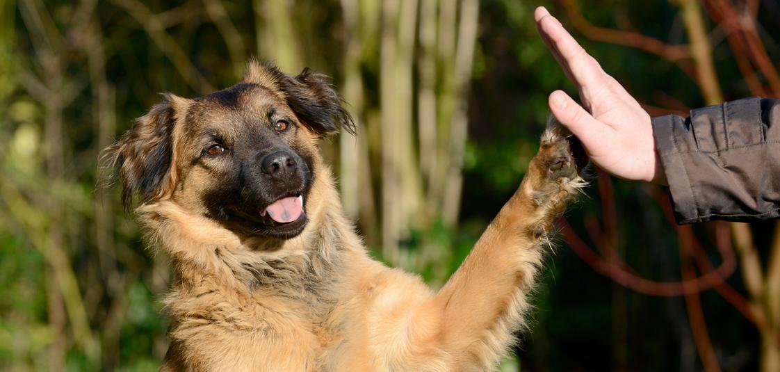 Educacion canina: Educar o Adiestrar? Esa es la cuestión