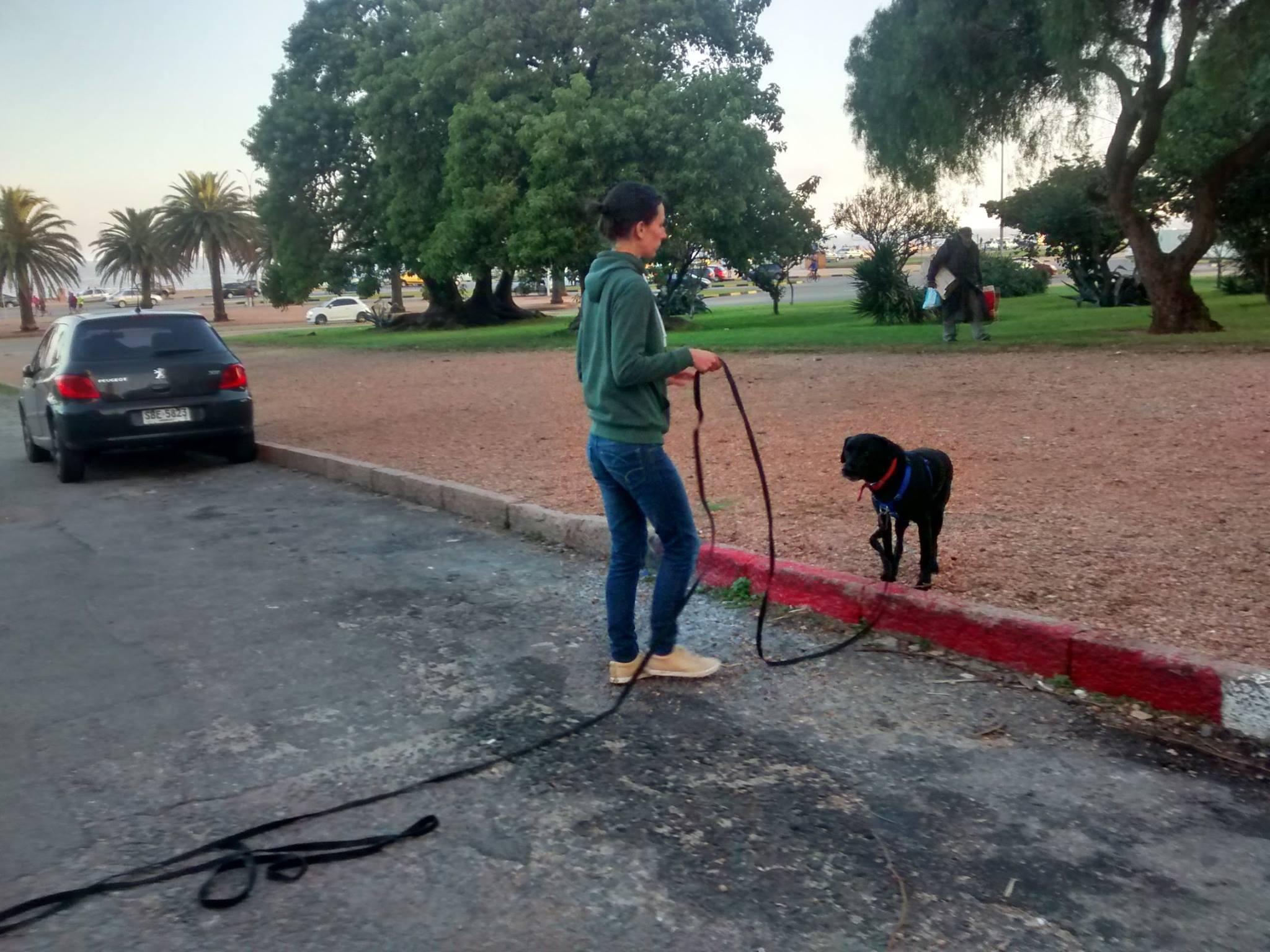 Educación caninca - Caso de perro que presenta algunos problemas a la hora del paseo